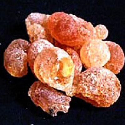 Ammoniacum
