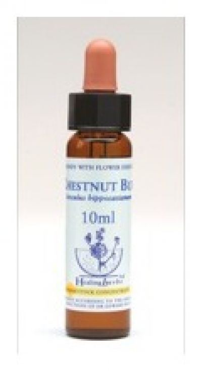 Chestnut Bud Healing Herbs Flower Rem (10ml)