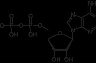 Adenosine Diphosphate