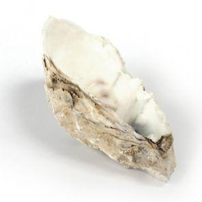 Calcarea carbonicum
